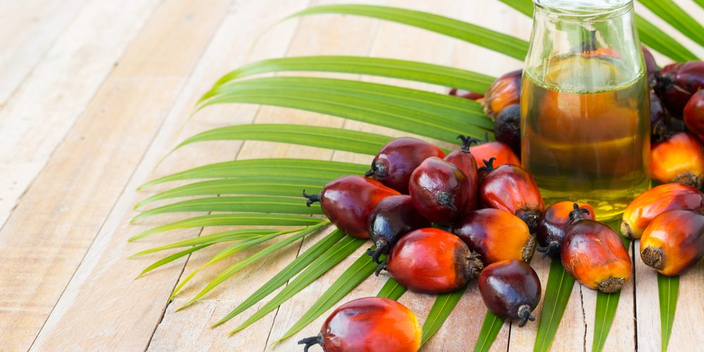 Palm Yağı
